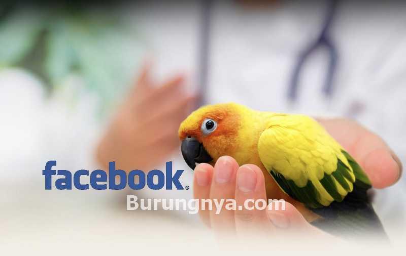 Dilarang Jual Beli Burung di Facebook (worldvectorlogo.com)