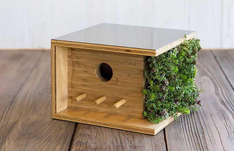 Glodok Lovebird Unik Kotak (homecrux.com)