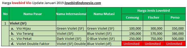 Harga Lovebird Violet Terbaru (lovebirdindonesia.com)