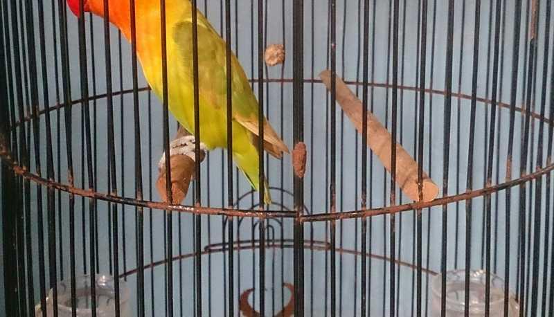 Jenis Tangkringan Burung (mysomer.com)