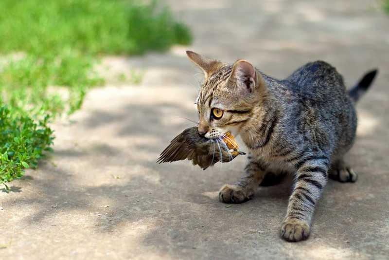 Kucing Makan Burung (amusingplanet.com)