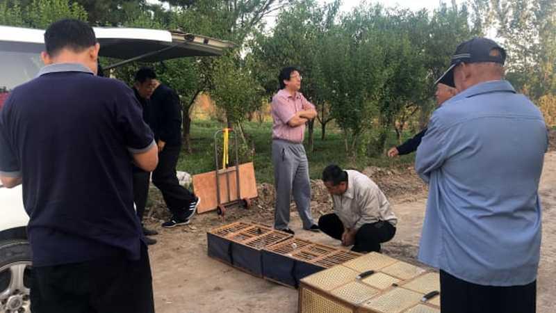Zhang Yajun Melatih Merpati Balap (cnn.com)