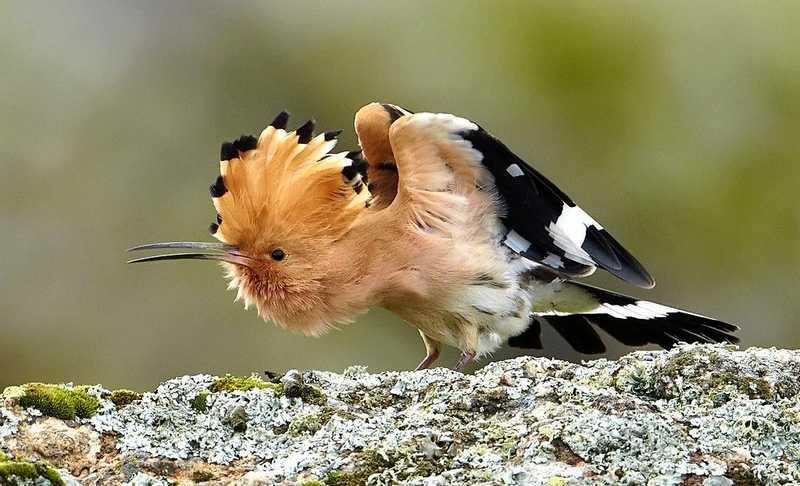 Burung yang disebut dalam Alquran (pinterest.com)