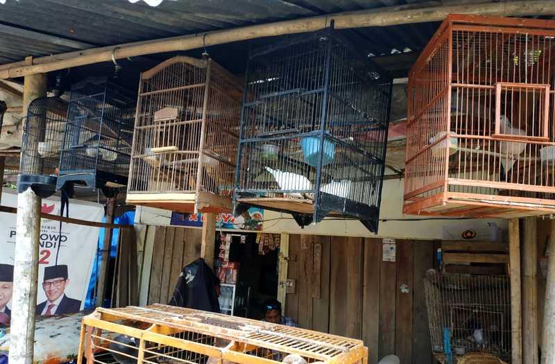 Harga Burung Turun Drastis, Penjual Burung Gulung Tikar