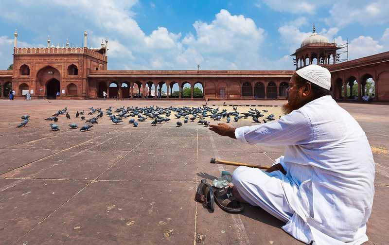 Hukum Islam memelihara burung dalam sangkar (hiveminer.com)
