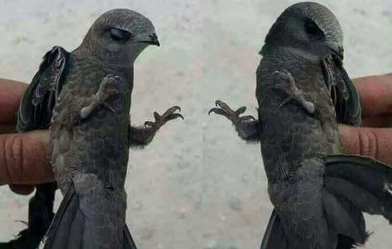 Penampakan burung Ababil (youtube.com)