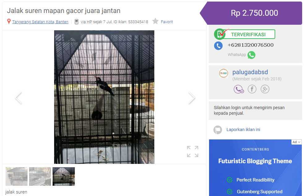Harga Jalak Suren Gacor (olx.co.id)