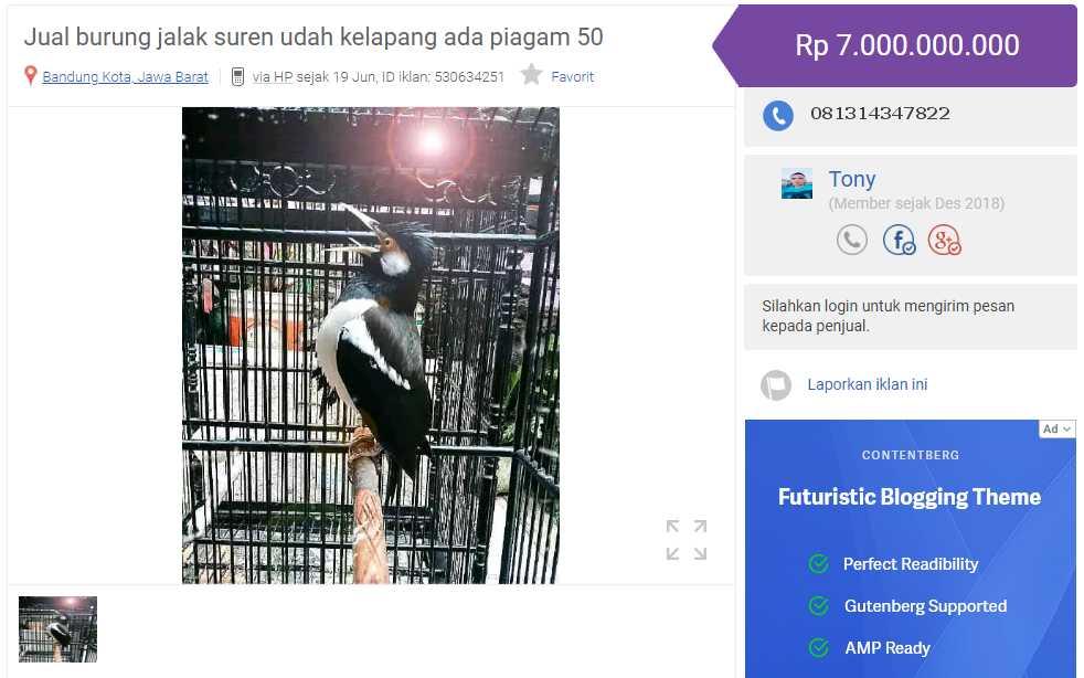 Harga Jalak Suren Termahal (olx.co.id)