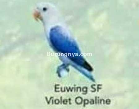 Lovebird Euwing SF Violet Opaline