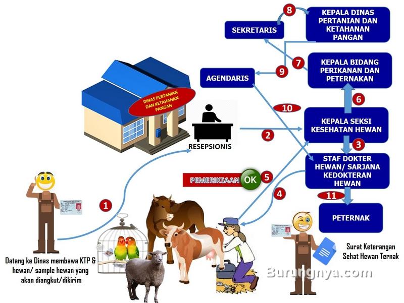 Prosedur Pelayanan Surat Keterangan Kesehatan Hewan (menpan.go.id)