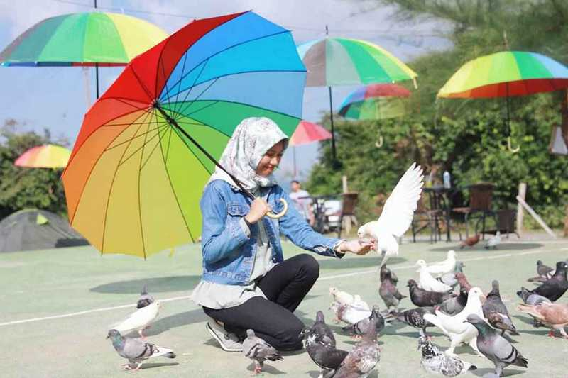 Taman Wisata Burung Dara Murah Meriah