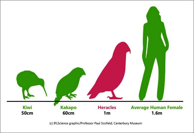 Burung Nuri Tertinggi di Dunia (iflscience.com)