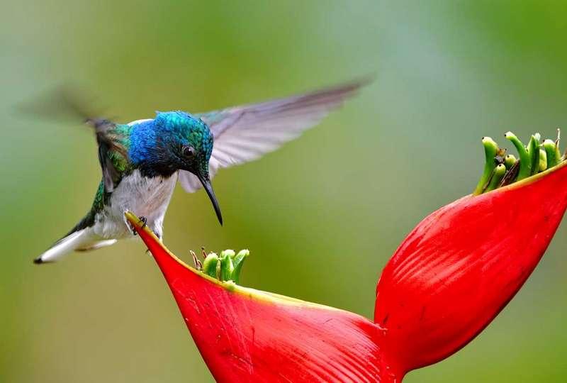 Fakta Menarik Burung Kolibri (guideposts.org)