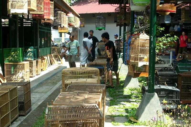 Harga Burung di PASTY Yogyakarta (exploring-pasar.blogspot.com)