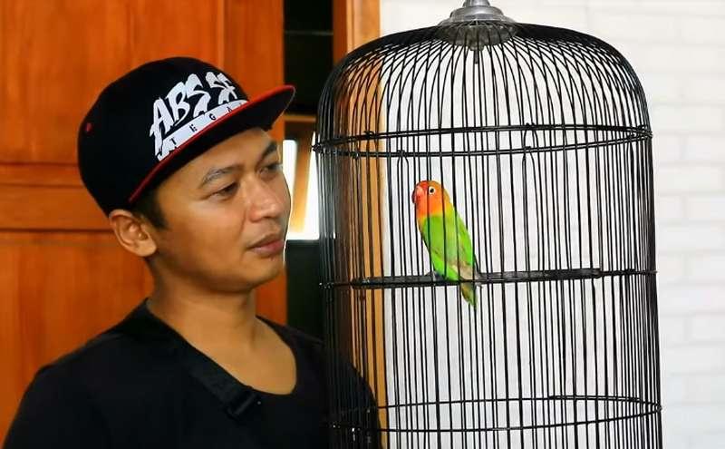 Lovebird Kang Raden dan Alel (youtube.com)