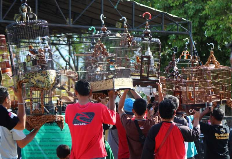 Peraturan Ditjen KSDAE Lomba Burung Kicau di Indonesia (joglosemarnews.com)