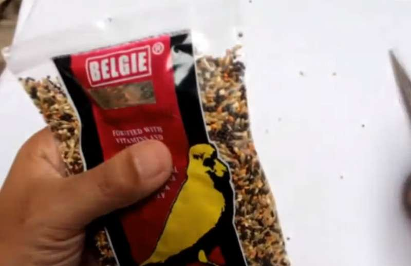 Review Pakan Kenari Belgie (youtube.com)