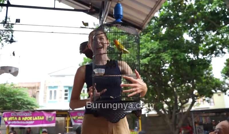 Wanita Cantik Gantang Burung Lovebird (youtube.com)