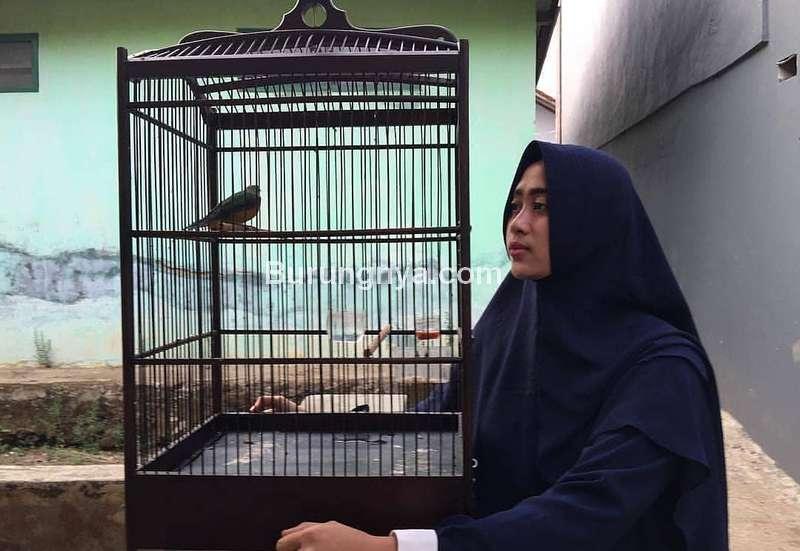 Istri Hobi Memelihara Burung (stapico.com)