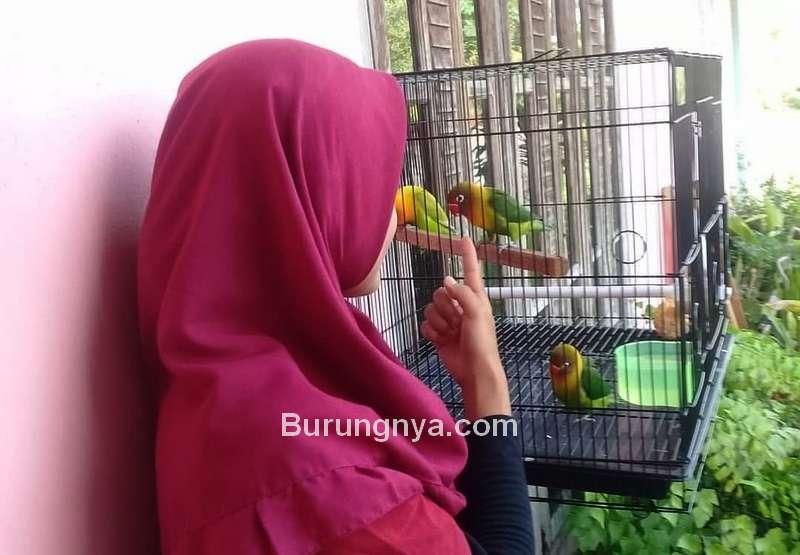 Istri Hobi Pelihara Burung tapi Suami Kurang Mendukung