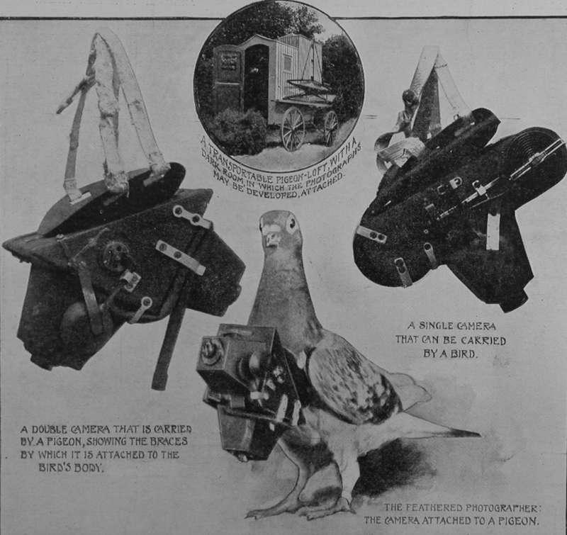 Kamera dipasang di Tubuh Merpati untuk Perang (pinterest.com)