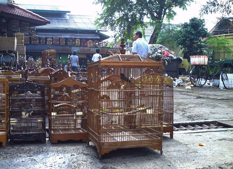 Pasar Burung Pramuka Jakarta (goldoriole.blogspot.com)