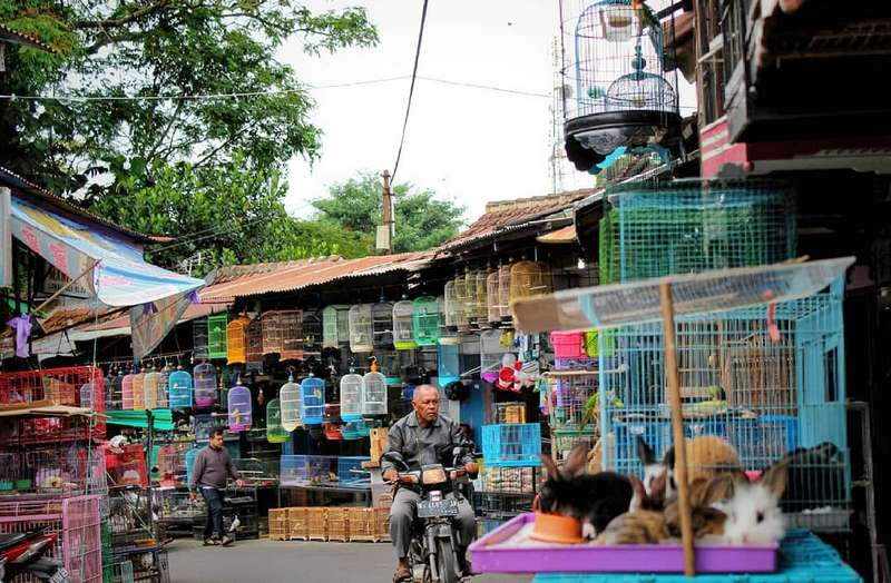 Pasar Burung Splendid Malang (travelingyuk.com)