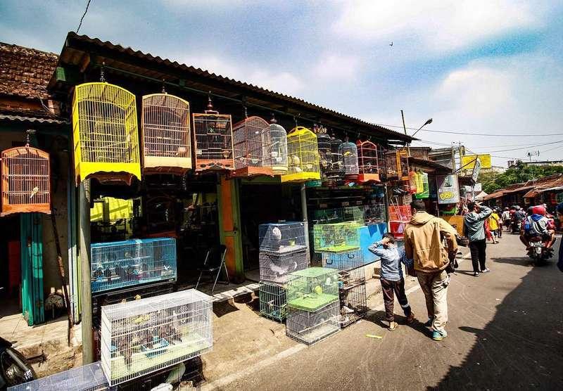 Pasar Burung Terkenal di Indonesia (travelingyuk.com)