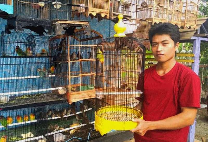 Dilarang Jual Beli Online, Usaha Pedagang Burung Jadi Sepi