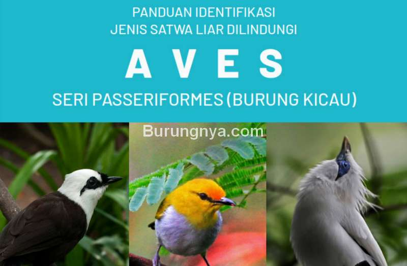 Buku Identifikasi Burung Dilindungi dari KLHK (menlhk.go.id)