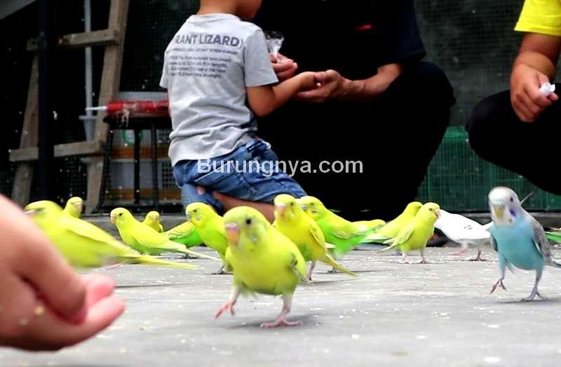 Burung Mudah Jinak dan Cocok Dipelihara di Rumah (youtube.com)