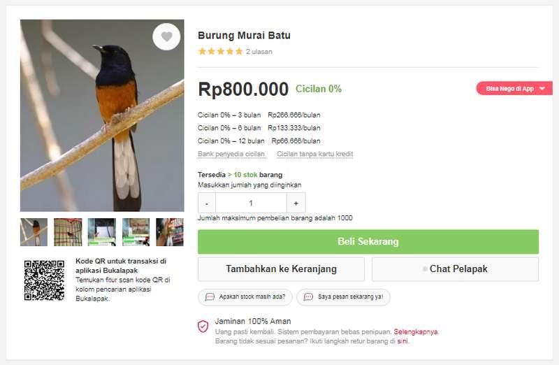 Cara Beli Burung Kredit Online (bukalapak.com)