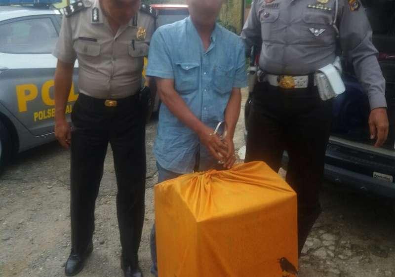 Pemilik Cucak Ijo Wajib Mempunyai Surat Izin BKSDA (krakataunews.com)