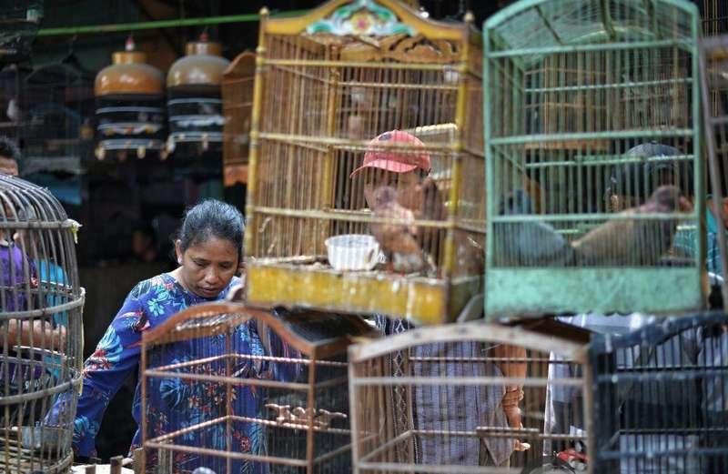 Tips Beli Burung di Pasar atau Kios agar Tidak Menyesal (madiuntoday.id)