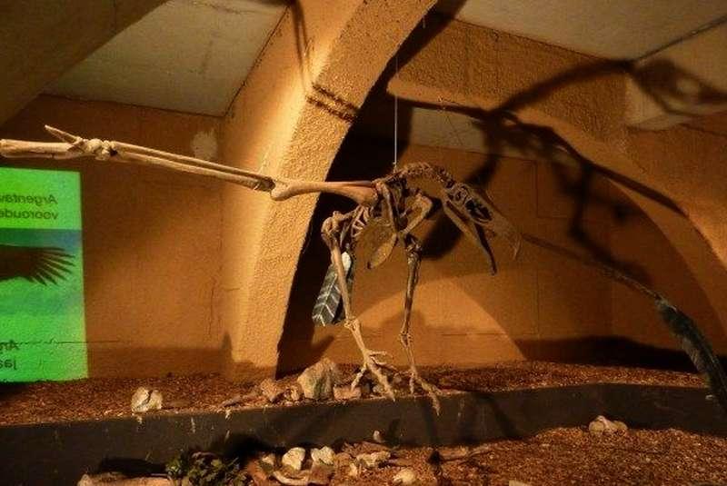 Tulang Kerangka Burung Argentavis magnificens (yearofcleanwater.org)