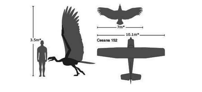 Ukuran Tubuh dan Sayap Burung Terbesar di Dunia (dinoanimals.pl)