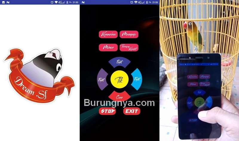 Aplikasi Training Lovebird versi Google Play Store (play.google.com)