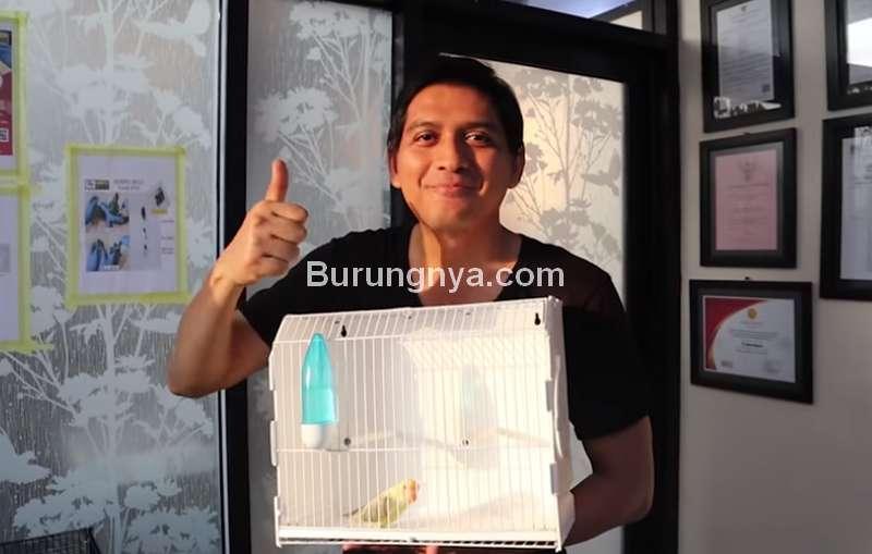 Artis Lucky Hakim Beli Lovebird Dun Fallow Rp 280 Juta (youtube.com)