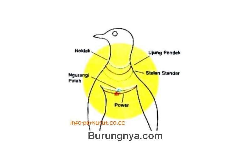 Ikatan Tali Perkutut untuk Setelan Suara Noklak dan Ujung (info-perkutut.co.cc)