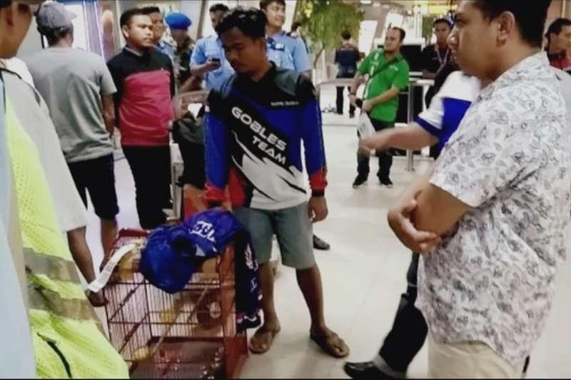 Burung Kacer Rp 150 Juta Hilang di Pesawat Garuda Indonesia (kompas.com)