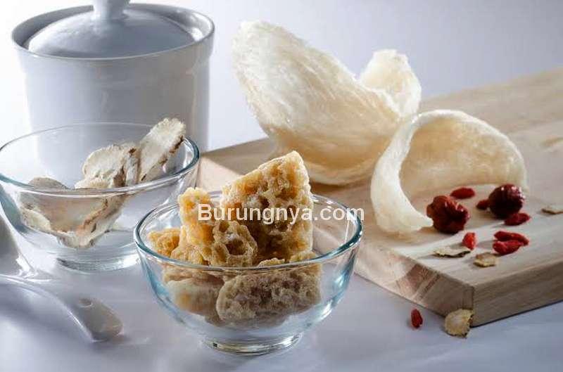 Manfaat Sarang Walet untuk Apa (finestfood.com)