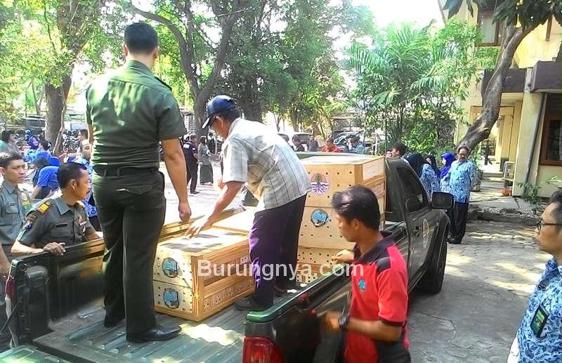 Balai Besar KSDA Jawa Timur Melepas Burung Dilindungi (oppobaca.news)