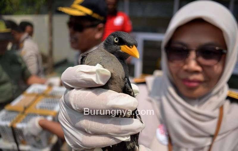 Balai Karantina Burung Impor (radarlampur.co.id)