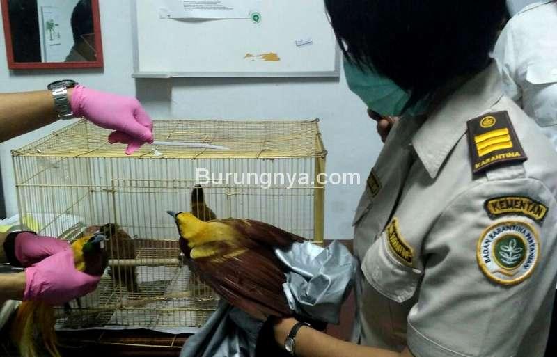 Burung Impor di Karantina (karantina.pertanian.go.id)
