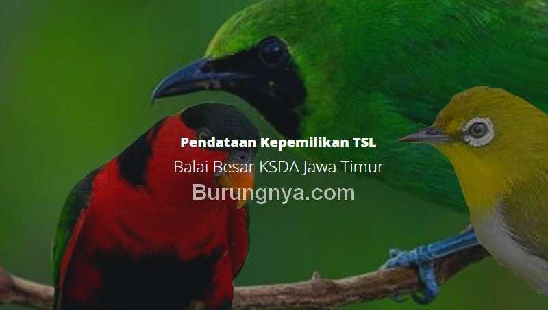 Cara Daftar Burung Dilindungi Online di BKSDA (pendataantsl.com)