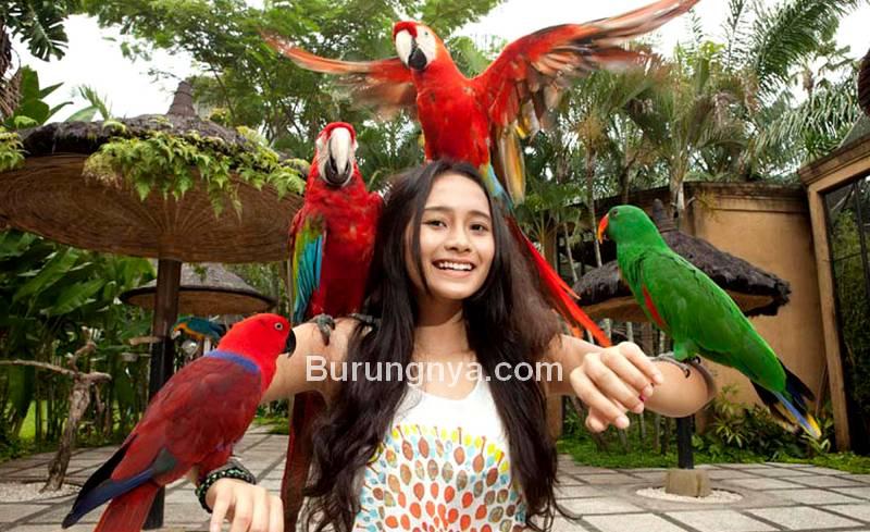 Komunitas Burung Paruh Bengkok Terbesar di Indonesia (zidanbalitour.com)
