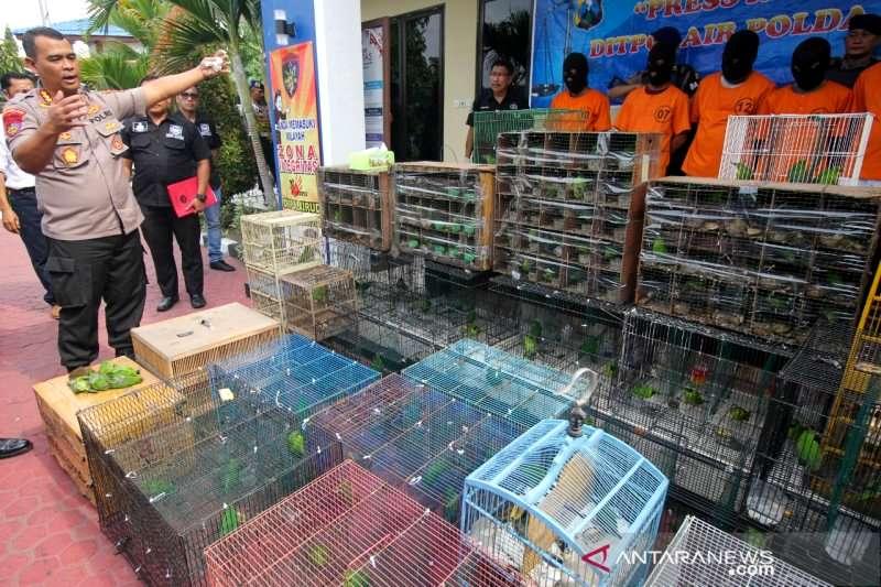 Ratusan Burung Cucak Ijo Diselundupkan (antaranews.com)
