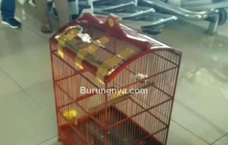 Sangkar Kacer yang Rusak dan Hilang di Pesawat Garuda (youtube.com)
