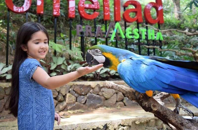 Taman Burung Bird Bromelia Pavilion (bird-pavilion.business.site)