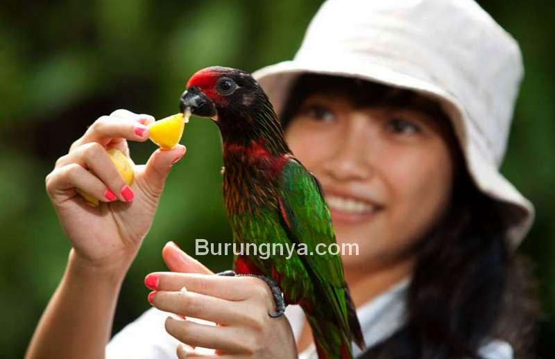 Beri Makan Burung di Taman Burung Bali (balibirdpark.com)